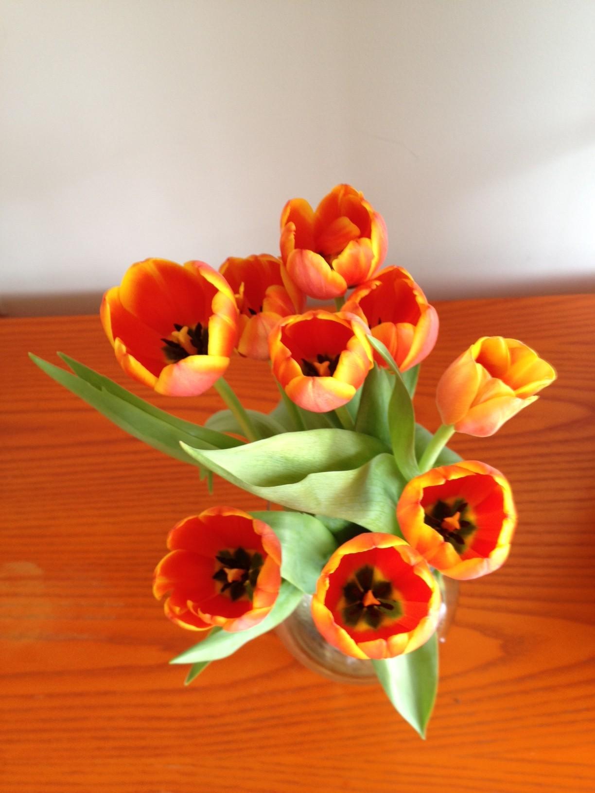 Mayeda tulips